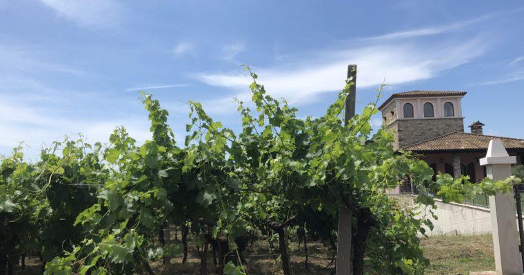 Weinregion Venezien – alles Lugana oder was?